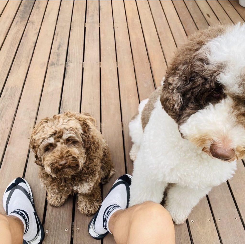 キムタクの犬 犬種