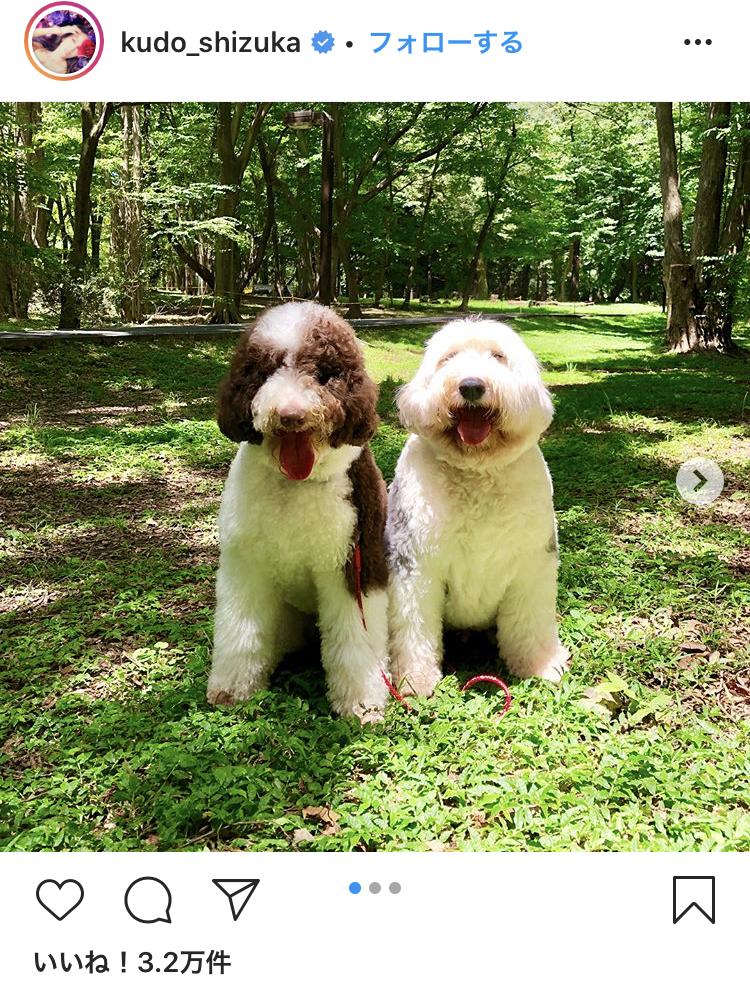 種類 キムタク 犬